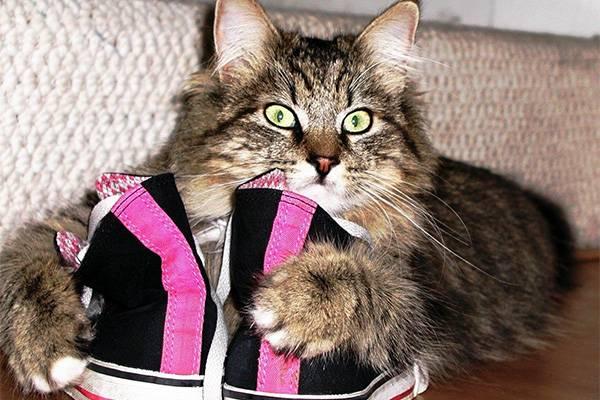 Кот в обуви