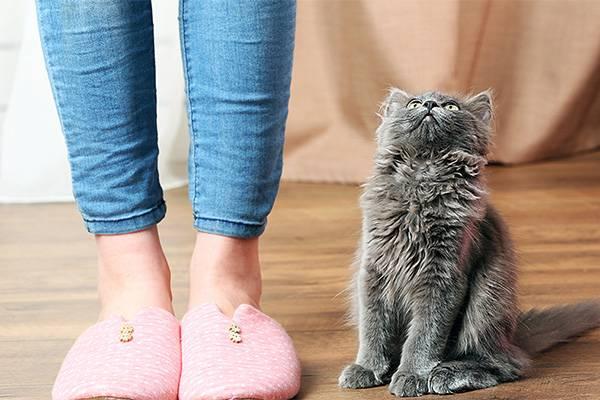 Хозяйка и котик