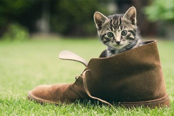 Котенок в башмаке