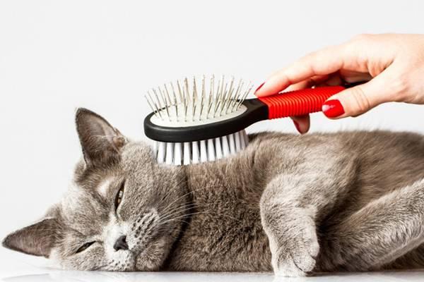 Вычесывать кота