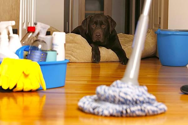 уборка, собака